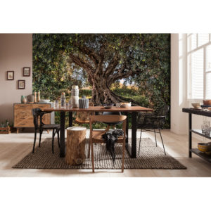 368 x 254cm Olive Tree Mural